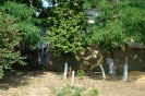 Тарутино - август 2009