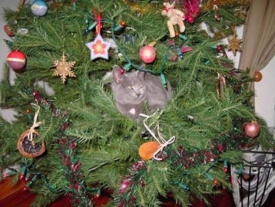 Коты и новогодняя ёлка