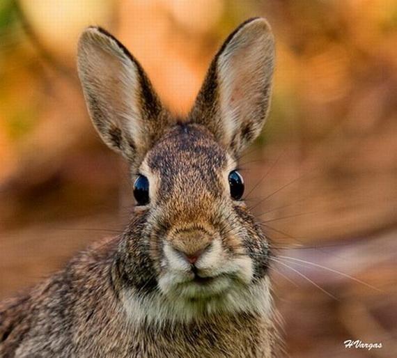 Кролики - символ Нового 2011 года